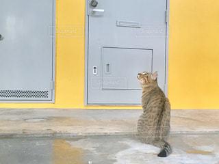 ドアの前に座っている猫の写真・画像素材[753631]