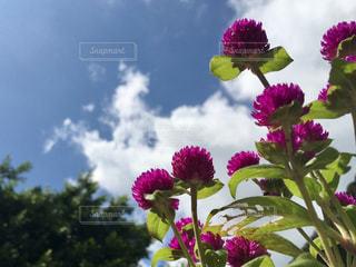 近くに紫の花のアップの写真・画像素材[789446]