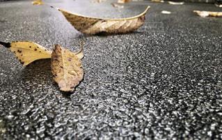 秋の音の写真・画像素材[810172]
