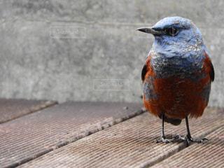 立っている鳥の写真・画像素材[874176]