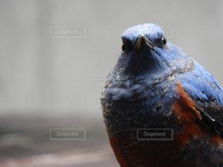 鳥のアップの写真・画像素材[874190]
