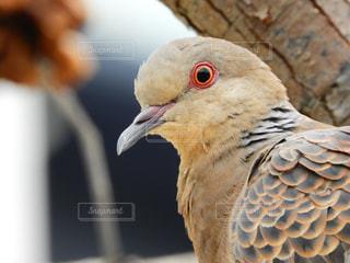 近くに鳥のアップの写真・画像素材[881817]