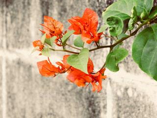 近くの花のアップの写真・画像素材[886905]