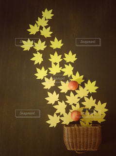 近くに黄色い花のアップの写真・画像素材[899309]