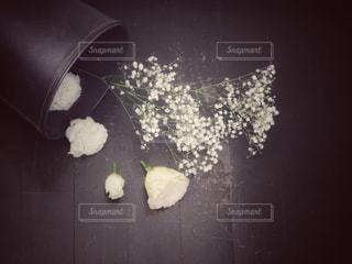 花の写真・画像素材[903578]