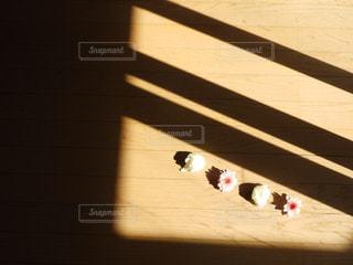 花と影の写真・画像素材[910991]