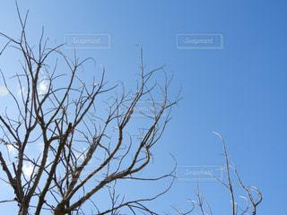 近くの木のアップの写真・画像素材[914935]