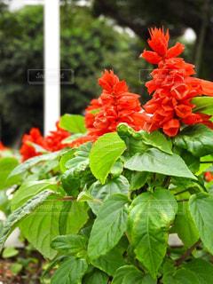 近くに植物の花のアップの写真・画像素材[914941]