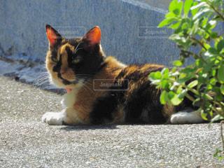 地面に横になっている猫の写真・画像素材[914942]