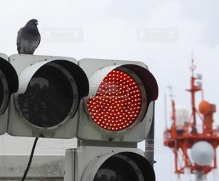 近くに信号機とハトの写真・画像素材[914943]