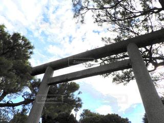 近くの木のアップの写真・画像素材[917939]