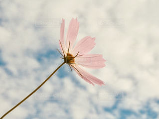近くの花のアップの写真・画像素材[917984]