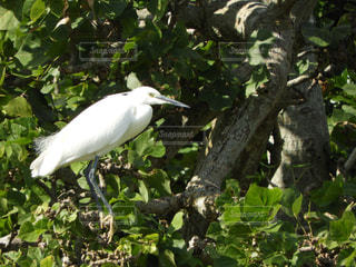 白い鳥が木の枝に止まってください。の写真・画像素材[917988]