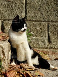 石の上に白と黒の猫の写真・画像素材[917996]