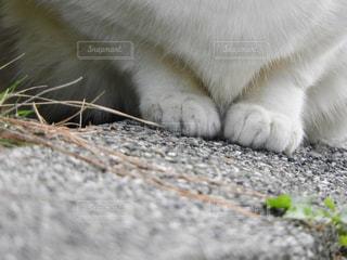 岩の上に座っている猫の写真・画像素材[918003]