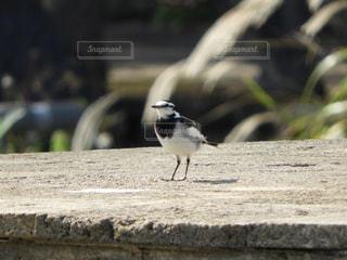 野鳥の写真・画像素材[918004]