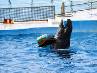 水のプールで泳ぐイルカの写真・画像素材[930330]