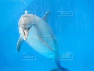 水面下を泳ぐ魚たち - No.930331