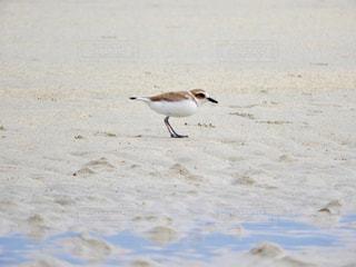 砂浜の上に鳥の写真・画像素材[982291]