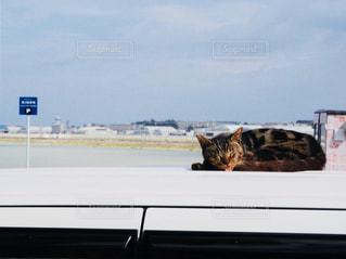 車の上で昼寝の写真・画像素材[982340]