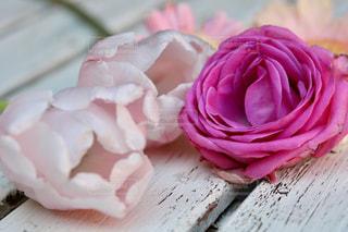 ピンクの写真・画像素材[1054797]