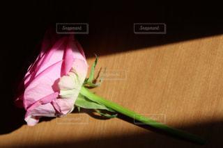 バラと影の写真・画像素材[1057064]