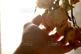 ドライフラワーと私の写真・画像素材[1123937]