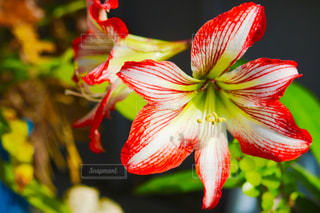 近くの花のアップの写真・画像素材[1123939]