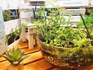 テーブルの上の緑の植物の写真・画像素材[1148891]