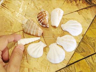 貝の写真・画像素材[1151735]