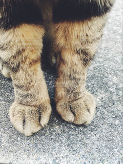 ネコ足の写真・画像素材[1152901]