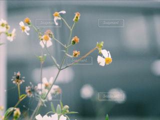 近くの花のアップの写真・画像素材[1156009]