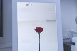鏡の前のバラの写真・画像素材[1175808]