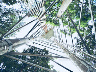 近くの木のアップの写真・画像素材[1243443]