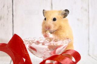 ハムスターの食事の写真・画像素材[1243445]