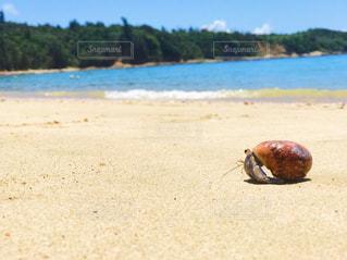 砂浜の上のヤドカリの写真・画像素材[1291490]