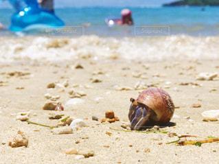 砂浜の上のヤドカリの写真・画像素材[1291491]