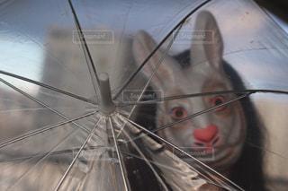 開いた傘とウサギの写真・画像素材[1427562]