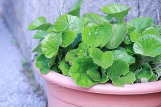 庭園の緑の植物の写真・画像素材[1548374]