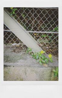 フィルム風の写真・画像素材[1569115]