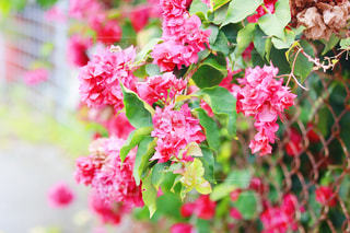 花の写真・画像素材[2233992]