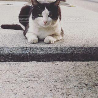 港の猫の写真・画像素材[1741867]