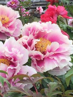 近くの花のアップの写真・画像素材[708340]