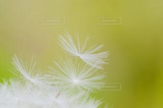 近くの花のアップの写真・画像素材[1202901]