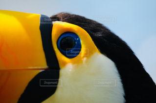 鳥の目の写真・画像素材[1202903]