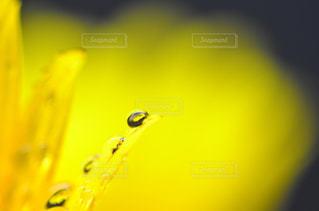 近くの花のアップの写真・画像素材[1203197]