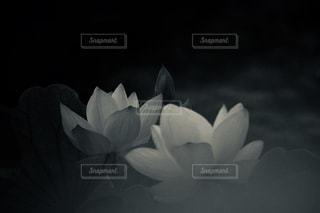 近くの花のアップの写真・画像素材[1203220]