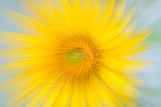 近くの花のアップの写真・画像素材[1204668]