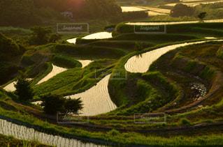緑豊かな緑のフィールドの表示の写真・画像素材[1206756]