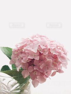 ピンクの花で一杯の花瓶の写真・画像素材[1209555]